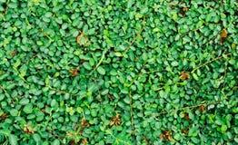 Kleine Groene bladeren Stock Afbeeldingen