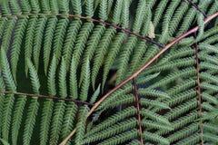 Kleine groene bladeren op een tak voor achtergrond of textuur stock afbeeldingen
