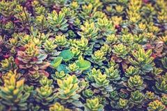 Kleine groene bloemen stock fotografie