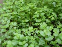 kleine groene grastuin stock foto's