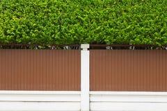Kleine groene installatie op huismuur openlucht Royalty-vrije Stock Foto