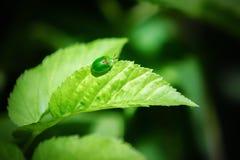 Kleine groene kever op een blad Stock Foto's