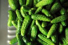 Kleine groene komkommers Royalty-vrije Stock Fotografie