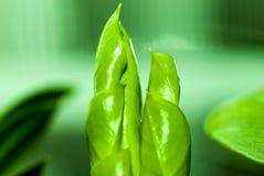 Kleine groene spruit Royalty-vrije Stock Foto's