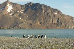 Kleine Groep Koning Penguins op een Kiezelsteenstrand royalty-vrije stock afbeelding