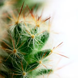 Kleine grote cactus Stock Foto's