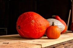 Kleine Grote Pompoenen Oranje Witte Houten Rustieke Plank Seizoengebonden A Royalty-vrije Stock Foto