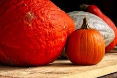 Kleine Grote Pompoenen Oranje Witte Houten Rustieke Plank Seizoengebonden A Royalty-vrije Stock Afbeeldingen