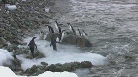 Kleine Gruppe adelis Pinguine, die die felsige Küste der antarktischen Insel übersehen stock video