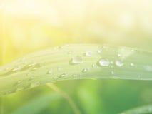 Kleine Gruppe Regentropfen auf Grasanlagen nach einem Regen Lizenzfreies Stockfoto