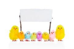 Kleine Hühner mit einem leeren Zeichen, Lizenzfreie Stockfotografie