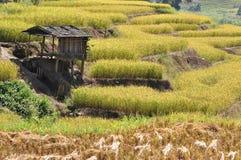 Kleine Hütte auf dem terassenförmig angelegten Reisgebiet Lizenzfreie Stockbilder