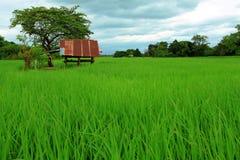 Kleine Hütte im Reisbauernhof Lizenzfreies Stockbild