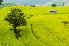 Kleine Hütte, Reisfelder und Berg an Bongpieng-Dorf Stockbild