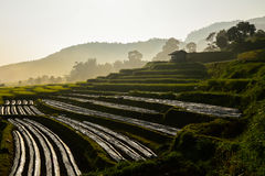 Kleine Hütte, Reisfelder und Berg an Bongpieng-Dorf Lizenzfreies Stockfoto