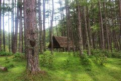 Kleine Hütte tief in den Kiefernwäldern Stockbilder