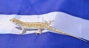 Kleine hagediszitting op een blauwe en witte stoffenachtergrond royalty-vrije stock foto