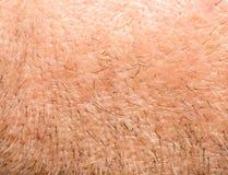 kleine haren op de huid Macro Stock Fotografie