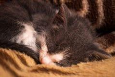 Kleine Hauskatze, die oben auf einer Decke im Hausabschluß schläft stockbild