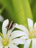 kleine Heuschrecke auf Blume   Stockfoto