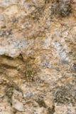 Kleine Heuschrecke in der Tarnung stockbilder