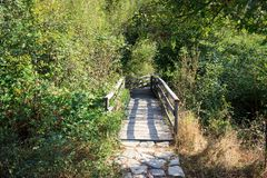 Kleine Holzbrücke im Wald stockbild