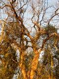 kleine Holzkiste draußen im Naturwaldhölzernen Special Stockbilder
