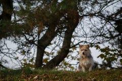 Kleine Hond Stock Foto