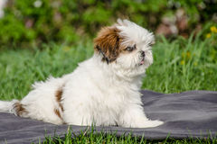 Kleine Hond Royalty-vrije Stock Foto's