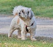 Kleine hond die in het openbare park kijken royalty-vrije stock foto's