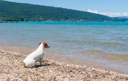 Kleine hond die over het vreedzame, turkooise water van Lak d& x27 kijken;  Royalty-vrije Stock Foto