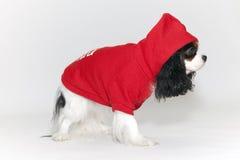 Kleine hond in een bovenkledij Stock Fotografie