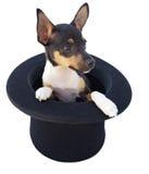 Kleine hond in een tovenaarhoed royalty-vrije stock afbeeldingen