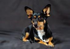 Kleine hond met een groot hart! stock afbeeldingen