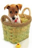 Kleine hond met een stuk speelgoed Royalty-vrije Stock Afbeelding