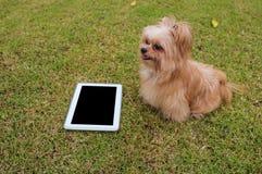 Kleine Hond met Tablet stock foto