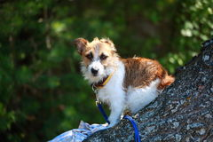 Kleine hond op een boom Stock Afbeelding