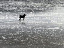 Kleine hond op het ijs stock foto's