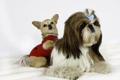 Kleine hond twee. stock afbeelding