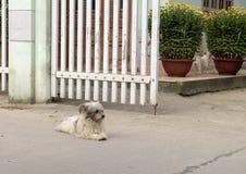 Kleine honden en gele bloemen voor viering Tet in het dorp Phuong Nam in Vietnam royalty-vrije stock afbeelding