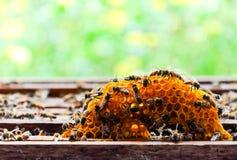 Kleine honingskam Royalty-vrije Stock Afbeeldingen