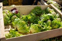 Kleine hoofden van greens sla voor verkoop bij landbouwersmarkt stock foto's