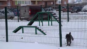 Kleine Hundezwinger bis zum Zaun und zu den Anfängen, zum des Schnees zu graben stock video