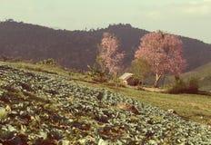 Kleine hut en kersenbloesem op gabbage Royalty-vrije Stock Afbeeldingen