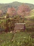 Kleine hut en kersenbloesem op gabbage Stock Foto