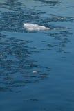 Kleine ijsberg Royalty-vrije Stock Fotografie