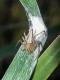 Kleine Insekte Stockfotografie