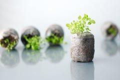 Kleine installatie concept de eerste resultaten, de eerste vruchten, ontwikkeling Royalty-vrije Stock Foto's