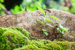 Kleine installaties op grond met groen mos Royalty-vrije Stock Fotografie