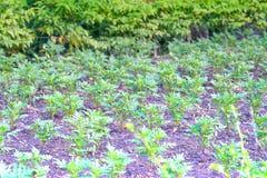 Kleine jong boompjeboom in tuinwerf stock foto